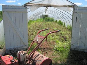 buckwheat610b.jpg