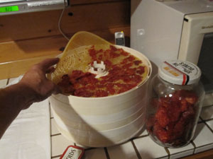 """Once the batch is dry, I just peel the liner off the rack and dislodge the """"tomato chips"""" by bending the tray liner.  These are put into glass jars and are covered up to avoid damage to the dried fruit from too much light."""